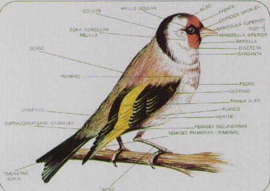 Morfologia De Las Aves