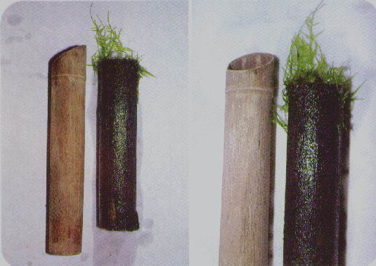 Ornamentos para el acuario. El bambú. - EL BAMBU EN EL ACUARIO